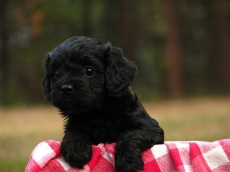 Dog and Puppy Pictures - My Dog Breeders