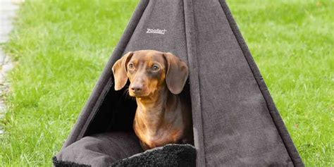 Lidl is Selling a Teepee Tent for Dogs