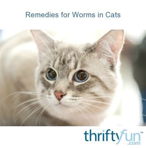 Remedies for Worms in Cats   ThriftyFun