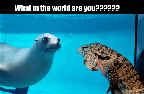 Hilarious Memes Featuring Animals Being Derps - Animals