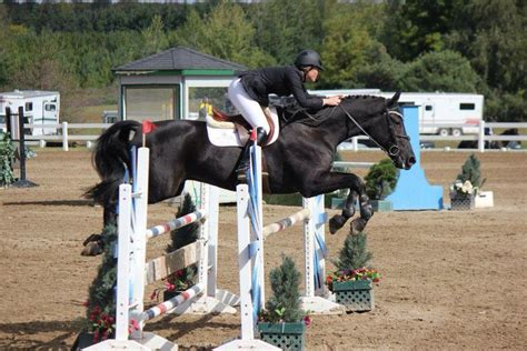 Show Ad – Horse Canada - Horses for Lease/Part Board
