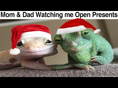 The Best Funny Pictures Of Today's Internet: Christmas Edition