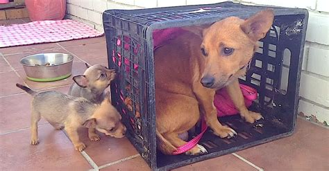 Heartbroken Mom Misses Her Puppies, But Has No Clue They